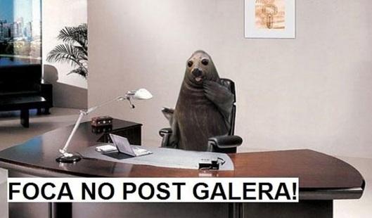 foca no post