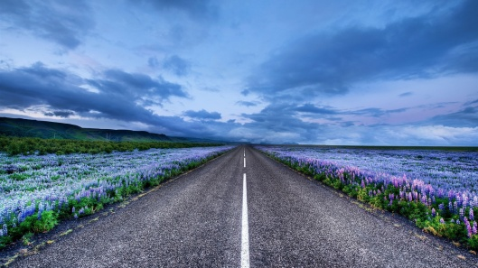 iceland-landscape-road-meadows-flowers-horizon-blue-sky_1920x1080